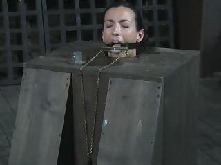 Bitch in a Box - BONUS